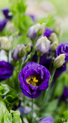 Garden inspiration in shades of purple: http://issuu.com/weddingstar/docs/weddingstar-contemporary-garden-lookbook