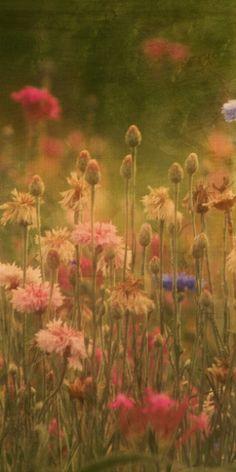 fleur, field of flowers, fields of flowers, field of wild flowers, buttons, bloom, flower fields, flowers garden, beauti flower