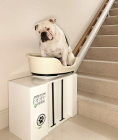 A Stairlift For Your Fat, Lazy pets or ones with with hip problems :)