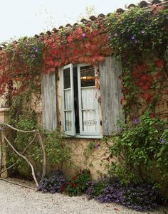 Vines and shutters.