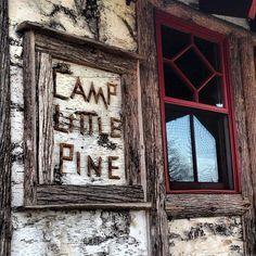 birch, camp, pine