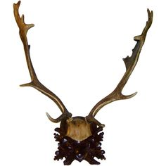 Exceptional Large Black Forest Farrow Antler Mount On Carved Wood... ❤ liked on Polyvore