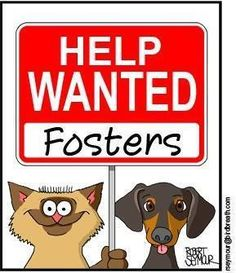 www.tanyasinc.org.if everyone could take just one..what a difference we could make..think adopt, don't shop and foster, foster, foster..www.capemaydog.com  loves shelter animals 4 4 ever homes