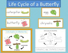 Free Download! Life Cycle of a Butterfly