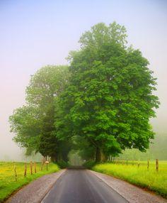 green tree tunnel