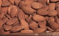 All-In-One Almond from Stark Bro's