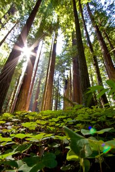 Redwoods National Park in Northern California. It is more then just gorgeous trees as the park has miles of pristine coastline.