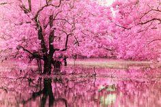 Pink Lore by helios-spada.deviantart.com on @deviantART