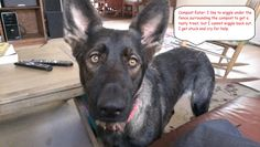 Mitzi-foster-dog