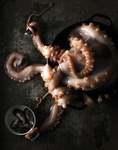 Seafood Series /- #recette #dressage #assiette #artculinaire #art #food #foodporn #gastronomy #gastronomic #fooddesign #culinary #foodart #gourmet #gourmand  #joiedevivre #museumviews #HauteCuisine