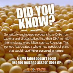 FACT: 96% of soybeans are now genetically engineered. GMOs were not created to feed the world, they were created to sell more chemicals! #GMOs #RightToKnow #GEFood #GMFood #Soy