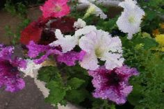 Cynthia Stogdill: My potted flowers using the ‪#monetsgarden‬ app lens. Thx! So beautiful pic.twitter.com/OwzW11sZ