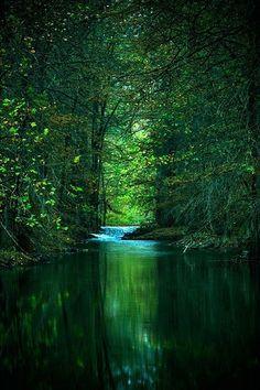 magic woods, so peaceful.