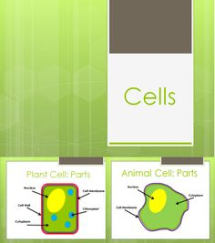 PowerPoint Lesson for teaching the difference between Plant and Animal Cells.