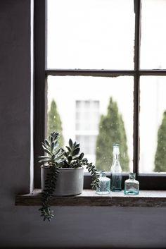 Succulents on Beth Kirby's kitchen window