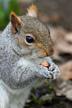 Nut Muncher