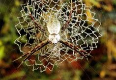 tangl web, spiders, spider webs, national geographic, spiderweb, natur, beauti pattern, charlott web, photography