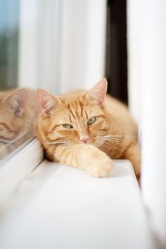 Ginger cat on a window sill. #cats