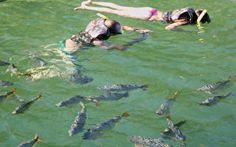 Ecoturismo - snorkel