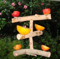 Fruit bird feeder