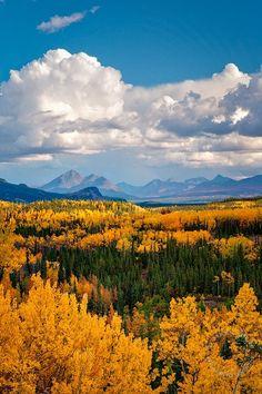 denali nation, nation park, mark graf, fall yellow, alaska, denali fall, national parks