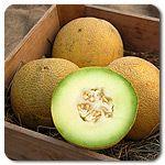 Organic Rona F1 Hybrid Melon