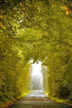 Green tunnel, Ireland