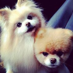 Cute babies...