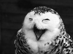 #animals #cute #laughing #owl