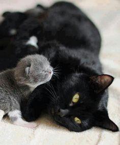 Mommy & kitten.