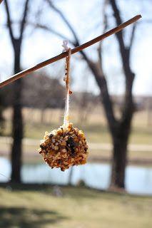 bird food, bird feeders, winter craft, pine cone crafts, kid