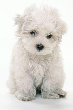 Sweet puppy!