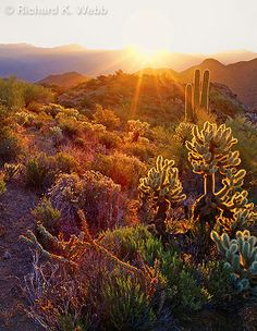 Arizona Highway between California and New Mexico