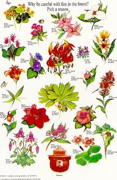 """Smokey's Wildflowers - """"Why be careful with fire in the forest? Pick a reason"""" by National Association of State Foresters via apartmenttherapy. #Illustration #Poster #Vintage #Wildflowers"""