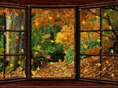Looking out the window into autumn