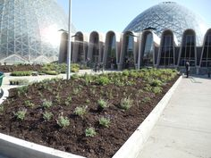 The planting at the entrance to the Mitchell Park Horticultural Conservatory (The Domes) as it was being installed. Photo by Roy Diblik, co-owner of Northwind Perennial Farm in Burlington, WI.
