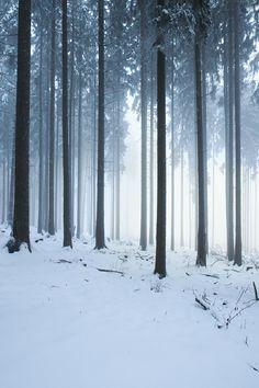 Winter ForestbyRegadenzia