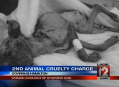 Demand Justice for Pit Bull Starved to Death - ForceChange PLEASE SIGN OR NOTHING WILL BE SET RIGH!