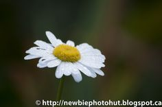 My Photo Gallery: Photos of Flowers I took Today :)