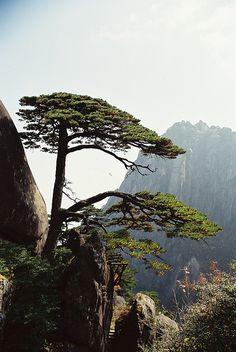 Huangshan é uma cordilheira no leste da China. Composta por material que foi erguida a partir de um antigo mar durante o Mesozóico100 milhões de anos atrás. As próprias montanhas foram esculpidas por geleiras durante o Quaternário. A área é conhecida por suas paisagens Huangshan é um tema frequente das tradicionais pinturas chinesas e literatura. É um Patrimônio Mundial da UNESCO, e um dos principais destinos turísticos da China.