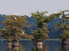 Reelfoot Lake State Park -  Tiptonville, TN