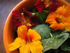 Nasturtiums, edible flowers. Can't wait for ours to bloom!
