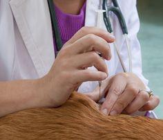Aprenda cómo reportar problemas con los alimentos o medicamentos de su #mascota. #salud #veterinaria
