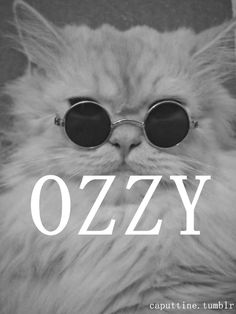if ozzy were a kitty. (kizzy)