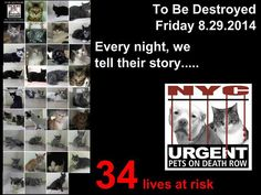 NYC **34** LIVES AT RISK!!!  34 Wonderful CATS TO BE DESTROYED Friday, August 29'14 ! They may differ in age, color and personality, but they're all purr-fect and they all deserve to live!!! PLEASE foster or adopt a shelter cat!!! https://www.facebook.com/media/set/?set=a.851995444818444.1073742416.220724831278845&type=3