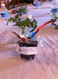 thank you gift for volunteers - individual tomato plants