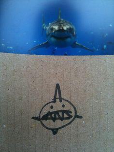 """""""shark week v weak shark"""""""