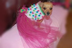 Snappy Pups Dog Sweater Dress