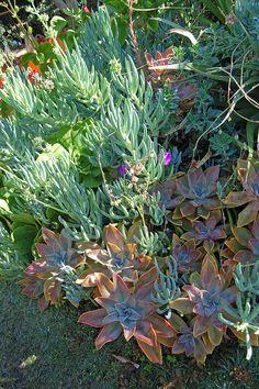 succul garden, studio garden, cohnston studio