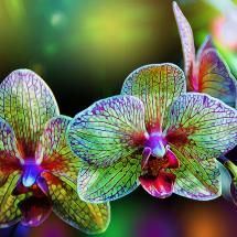 Alien orchids--I love Orchids:)